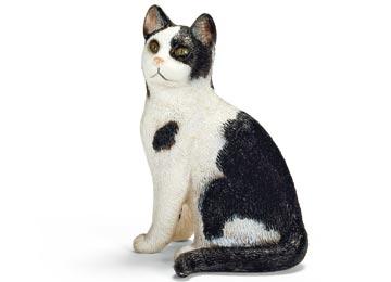 13637-cat-sitting-14
