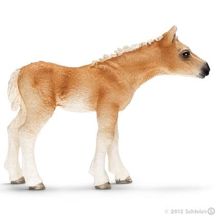 13699-haflinger-foal14