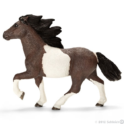 13707-icelandic-pony-stallion15