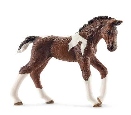 13760-knabstrupper-foal18
