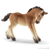 13779 Ardennes Foal*16