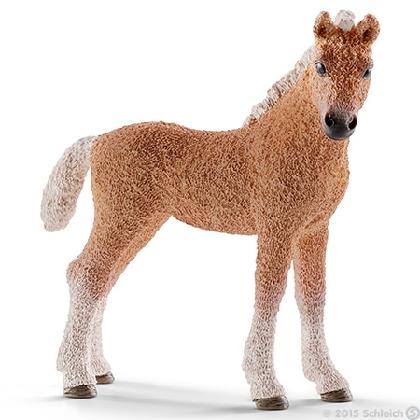 13781-bashkir-curly-foal16