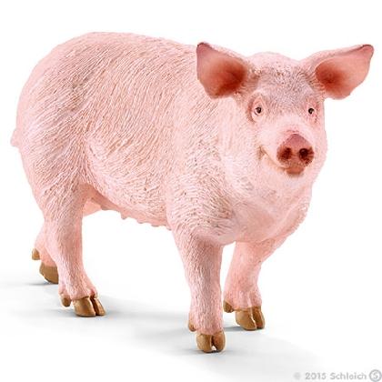 13782-pig