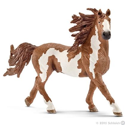 13794-pinto-stallion