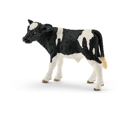 13798-holstein-calf