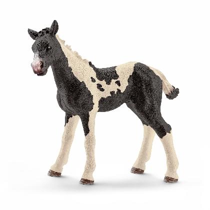 13803-pinto-foal