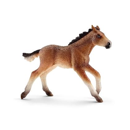 13807-mustang-foal