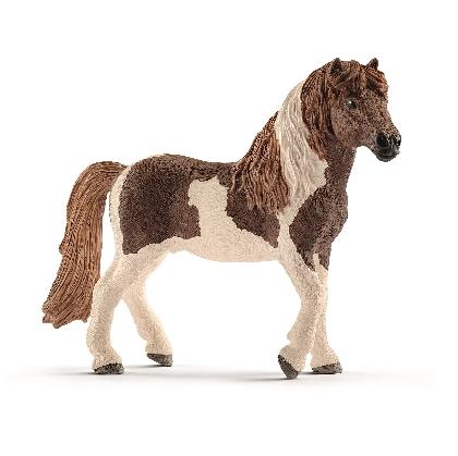 13815-icelandic-pony-stallion