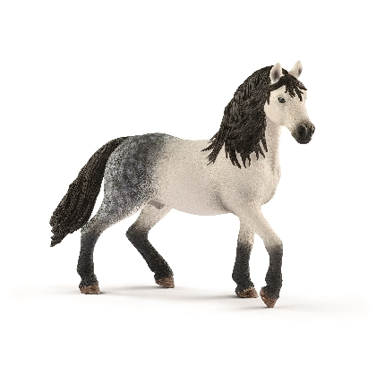 13821-andalusian-stallion