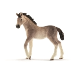 13822 Andalusian Foal