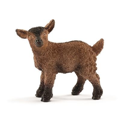 13829-goat-kid