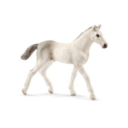13860-holsteiner-foal