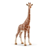 14750 Giraffe, Female