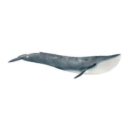 14806-blue-whale