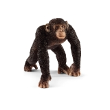 14817 Chimpanzee Male