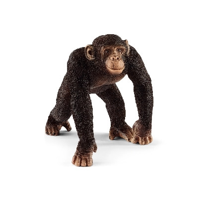 14817-chimpanzee-male