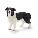 16840 Border Collie