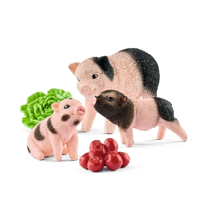 42422-miniature-pig-mother-and-piglets