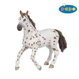 51509 Brown Appaloosa Mare